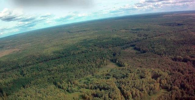 Кадр-5 - Подмосковная тайга.jpg